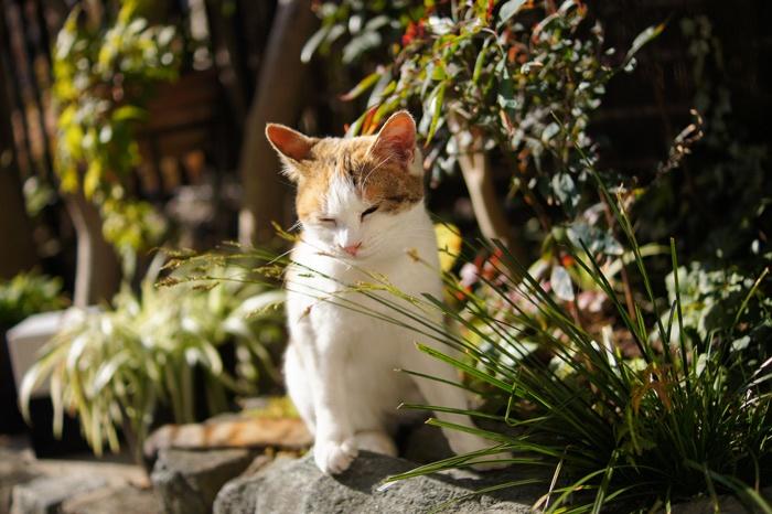 猫ボケ写真