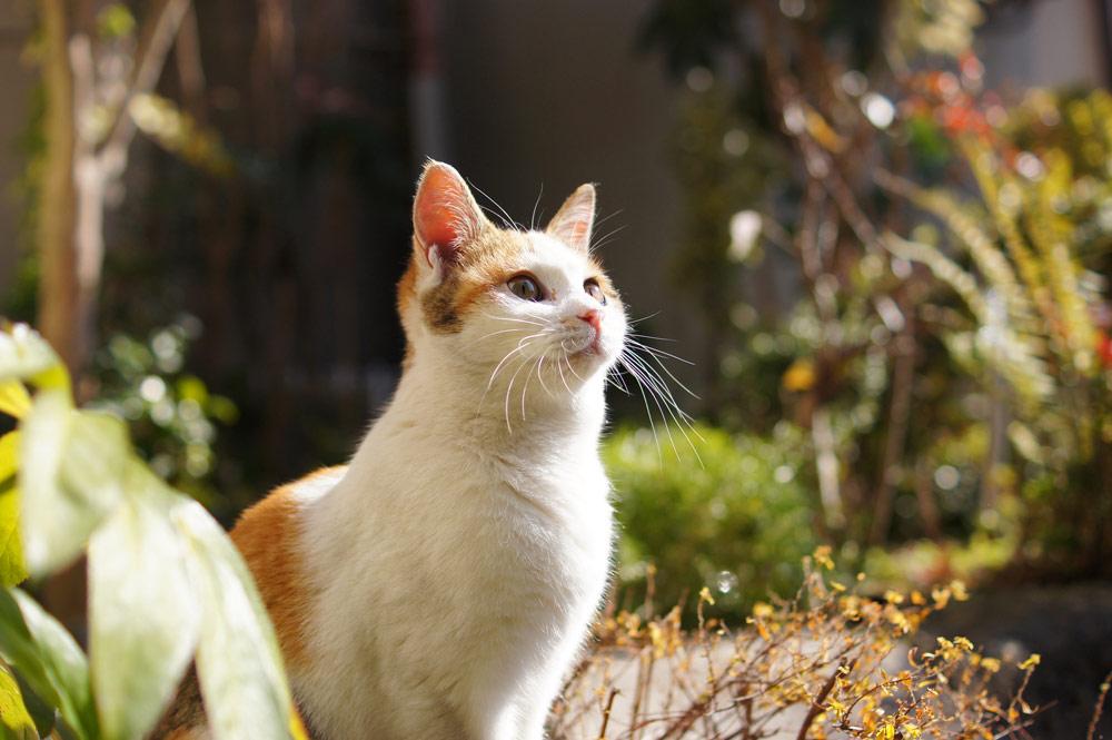 背景ボケの猫写真