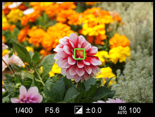花の写真中央1点