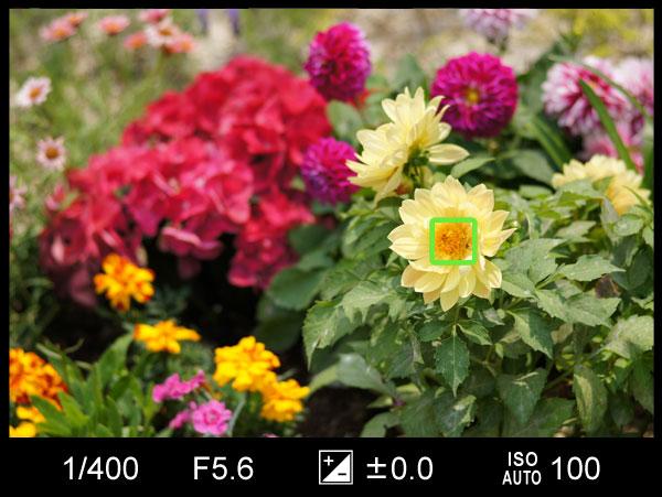 構図を変えた花の写真