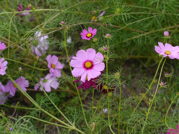 背景が綺麗でない花の写真