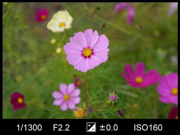 背景がスッキリした花の写真