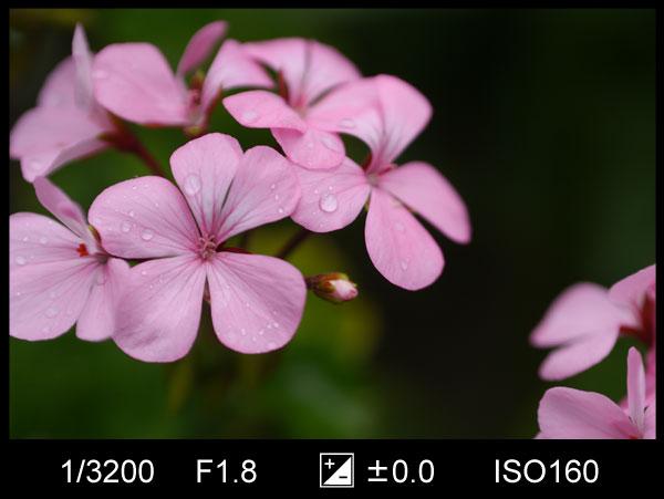 曇りの日の花の写真