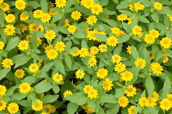 ハイアングル-花