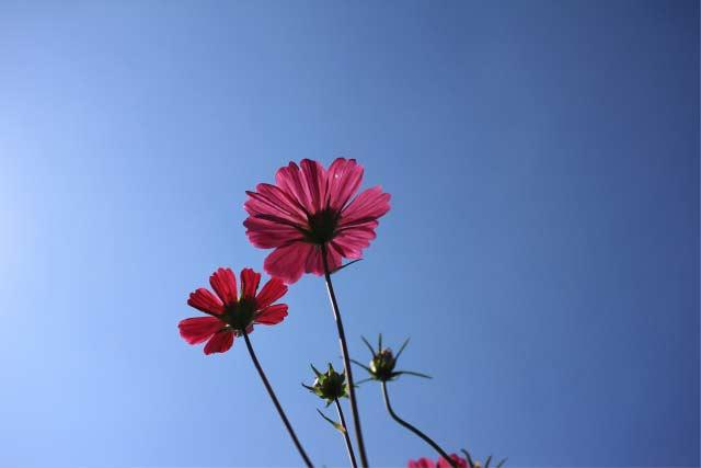 ローアングル-花撮影