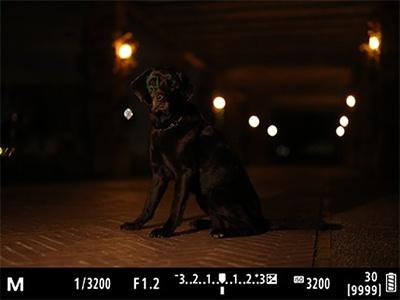 EOS R5低輝度合焦限界