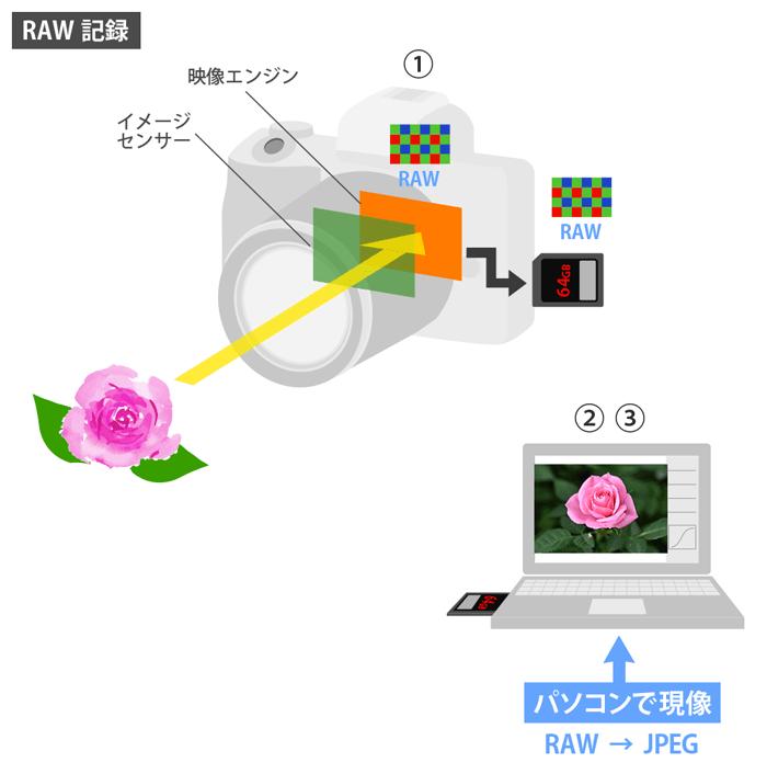 JPEG-RAW現像